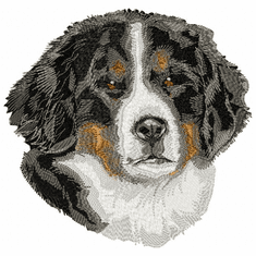 bmd013 Bernese Mountain Dog (small or large design)