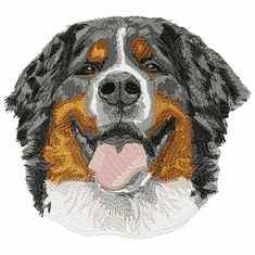 bmd021 Bernese Mountain Dog (small or large design)