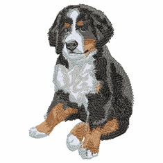 bmd024 Bernese Mountain Dog (small or large design)