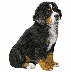 bmd028 Bernese Mountain Dog (small or large design)