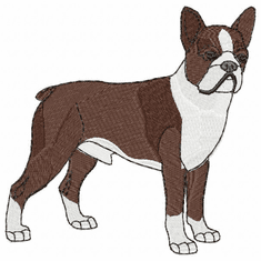 boston020 Boston Terrier (small or large design)