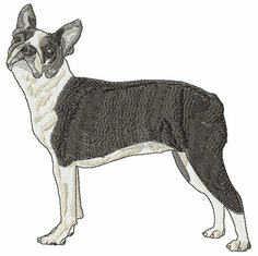 boston028 Boston Terrier (small or large design)