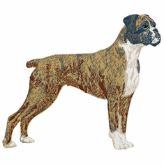 boxer023 Boxer (small or large design)