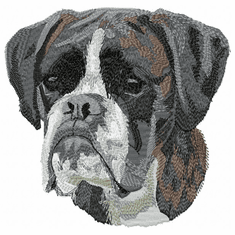 boxer046 Boxer (small or large design)