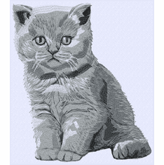 cat112 British Shorthair Kitten (small or large design)