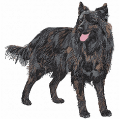 dutchshepherd003 Dutch Shepherd