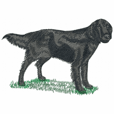 fcr007 Flat Coated Retriever  (small or large design)