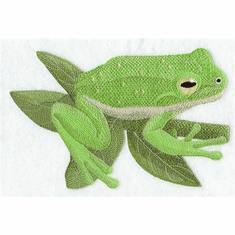 Frog 008