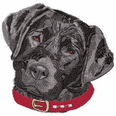 lab035 Labrador Retriever (small or large design)