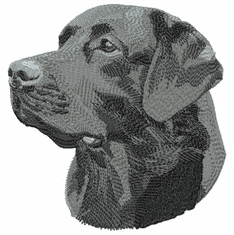lab044 Labrador Retriever (small or large design)