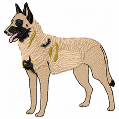 malinois009 Belgian Malinois (small or large design)