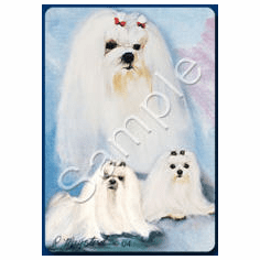 Maltese Playing Cards