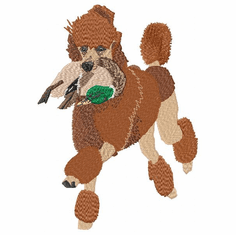 pood008 Poodle-Red Poodle Retreiving Male Mallard Duck (small or large design)