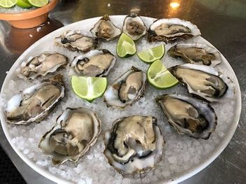 All Oysters