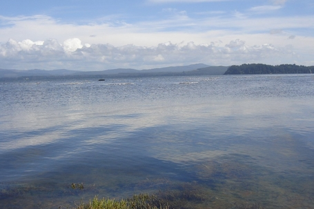 willapa bay clear water