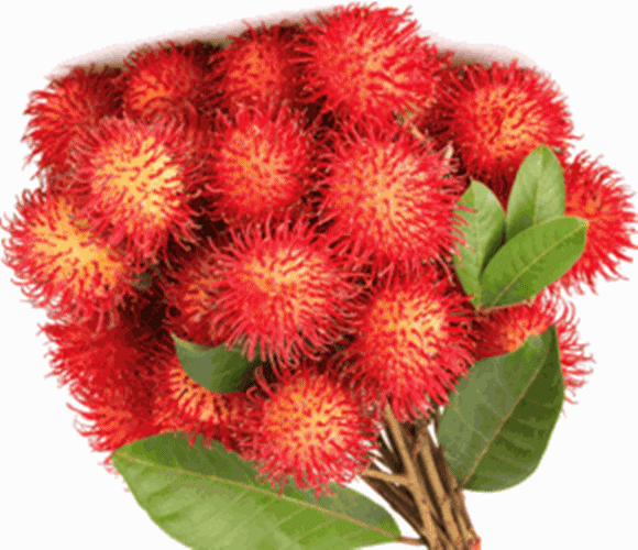 Exotic Fruit Club with free shipping 5 month membership