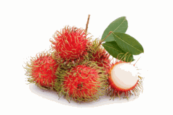 Fresh Rambutans in Bulk