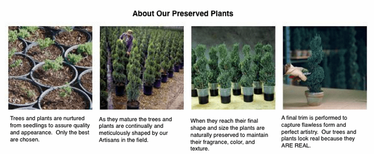 About Our Preserved Plants