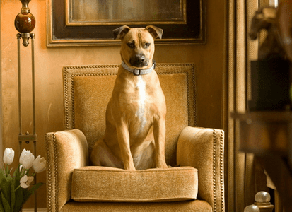 Designer Dogs Model Home Accents and Furniture