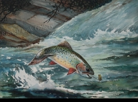 SCHALDACH: BROOK TROUT</a><br><b>- SOLD</b>