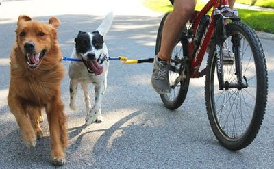 Bike Tow Leash Two Dog Coupler Accessory