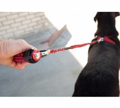 Bungee Dog Leashes