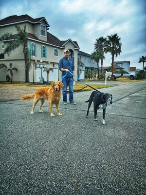 Dog Bungee Coupler Leash Attachment