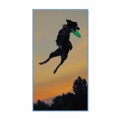 Flashflight Dog Discuit Light-up LED Frisbee Disc