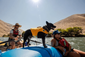 Float Coat Dog Life Vest