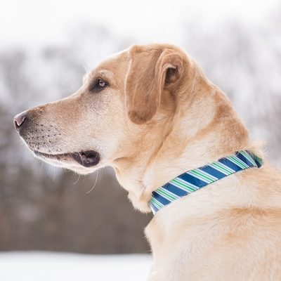 Muck Dog Waterproof Collar