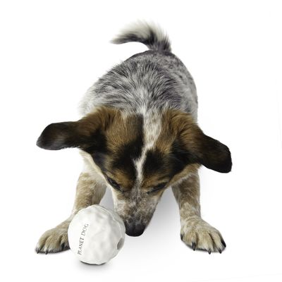 Orbee-Tuff Snowball Dog Toy