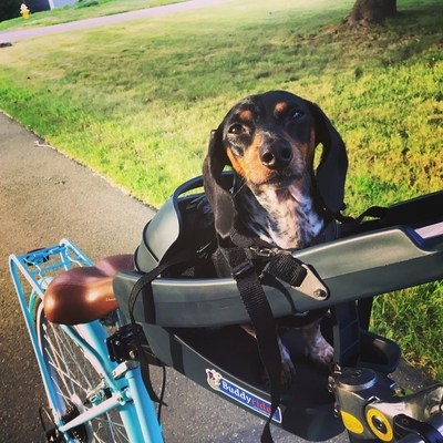 Personalized Buddyrider Dog Bike Seat