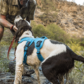 Top 10 Best Dog Harnesses For 2020