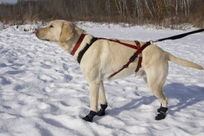 Ultra Paws Skijoring Harness