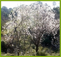 About Tu Bi Shvat and the Tree of Life