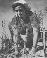 Pictures from the old days at the Kibbutz