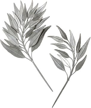 Uttermost 04283 Palm Branches Contemporary Silver Leaf Wall Decor