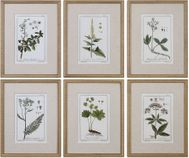 Uttermost 33651 Green Floral Botanical Study Contemporary Gold Leaf Wall Art