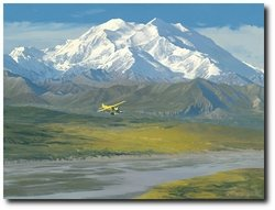 Denali Summer<br> By William S. Phillips<br>NEW GICLEE CANVAS<br>