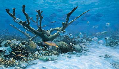 The Caribbean Reef
