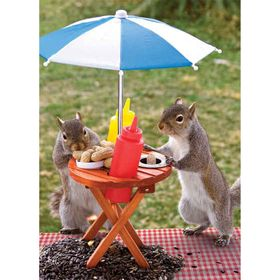 Lunch Time Squirrel Jigsaw Puzzle
