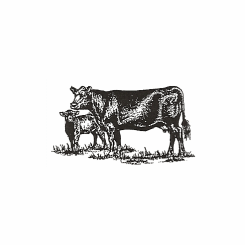 Angus Cow and Calf - Small