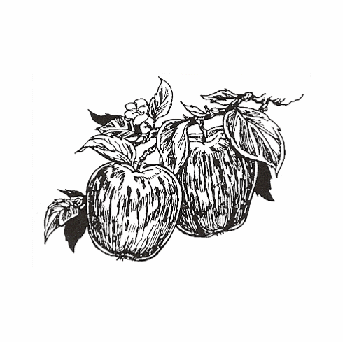 Apples - Small