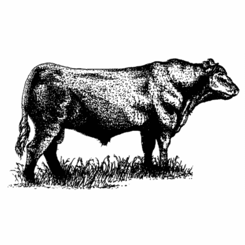 Stipple Angus Bull - Large