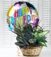 Birthday Dish Garden and blooming plants