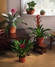 Cacti and bromeliad