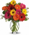 Gerbera Brights Flowers