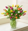 Multicolored Tulips,