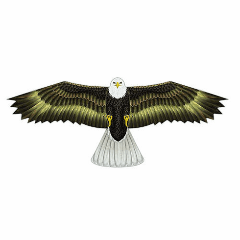 Birds of Prey Eagle Kite