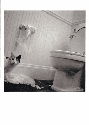 Cat and Toliet Paper